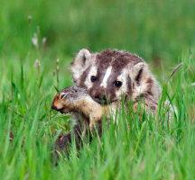 Mese a perverz mókusról és a fajtalankodó borzról: Lengyel János pártcsinovnyik irodalmi munkássága