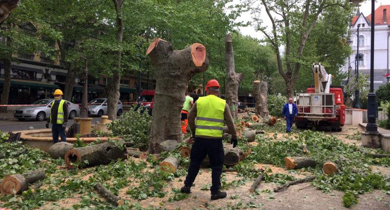 Megint egy méretes öngól: akkor kezdték el kivágni a Noszlopy utcai fákat, mikor kinyithattak volna a teraszok…